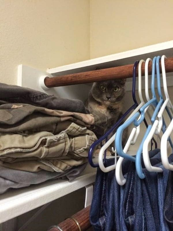 Funny cats - part 96 (40 pics + 10 gifs), cat pictures, cat in closet