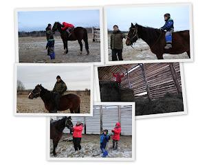 Конные прогулки для новичков и детей в Тверской области