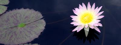 Water Lily at the Atlanta Botanical Garden