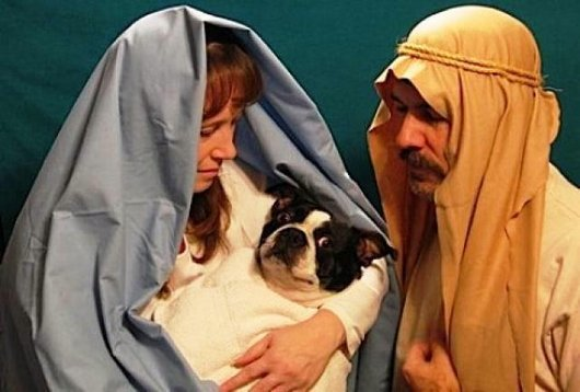 Baby Jesus Dog Card