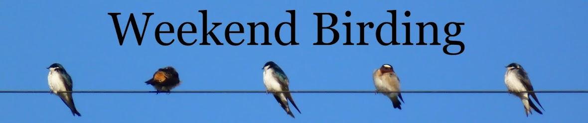Weekend Birding