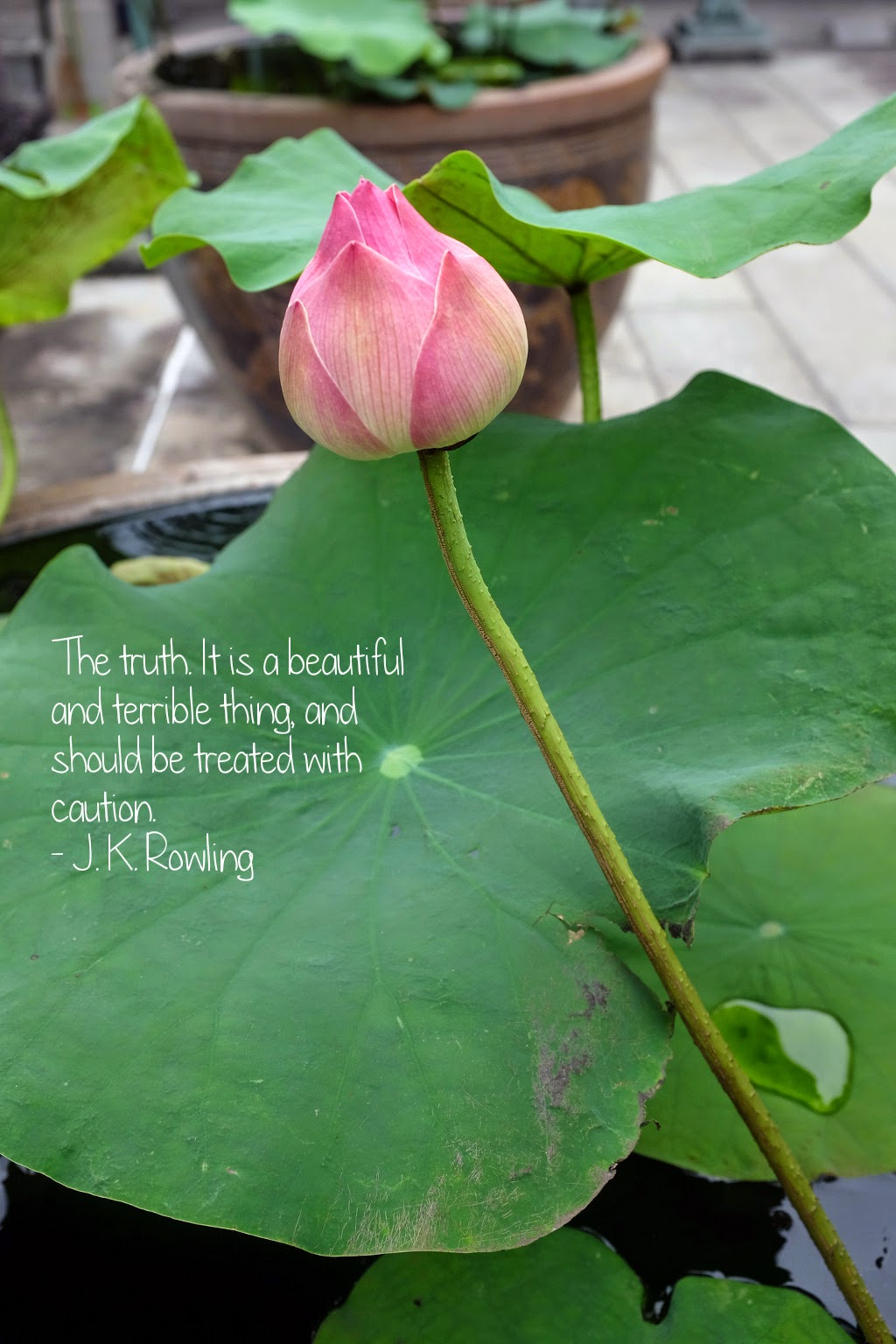 Thoughtsnlife.com : The truth. It is a beautiful and terrible thing, and should be treated with caution. - J. K. Rowling