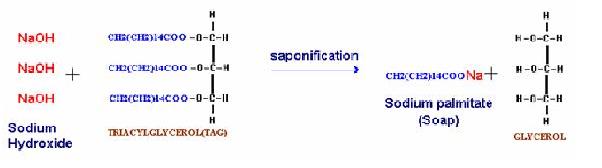 saponifiable lipids fr