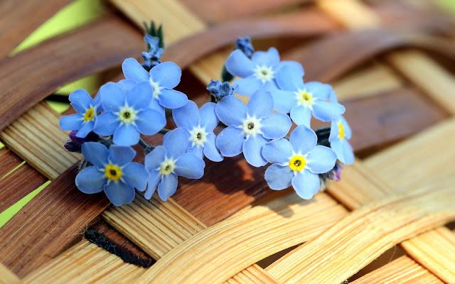 Flores Azules blue flowers
