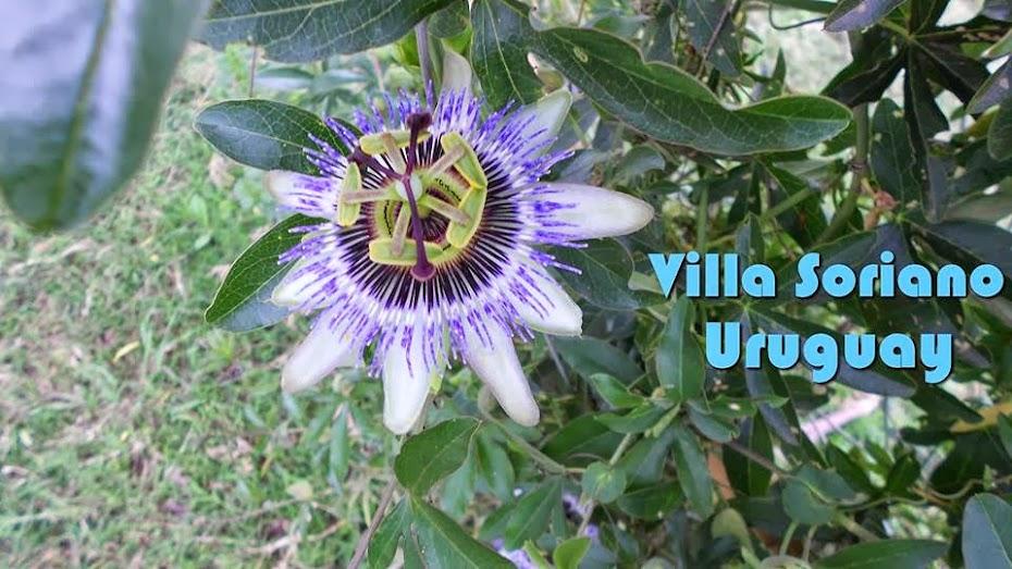 Villa Soriano; Soriano, Uruguay