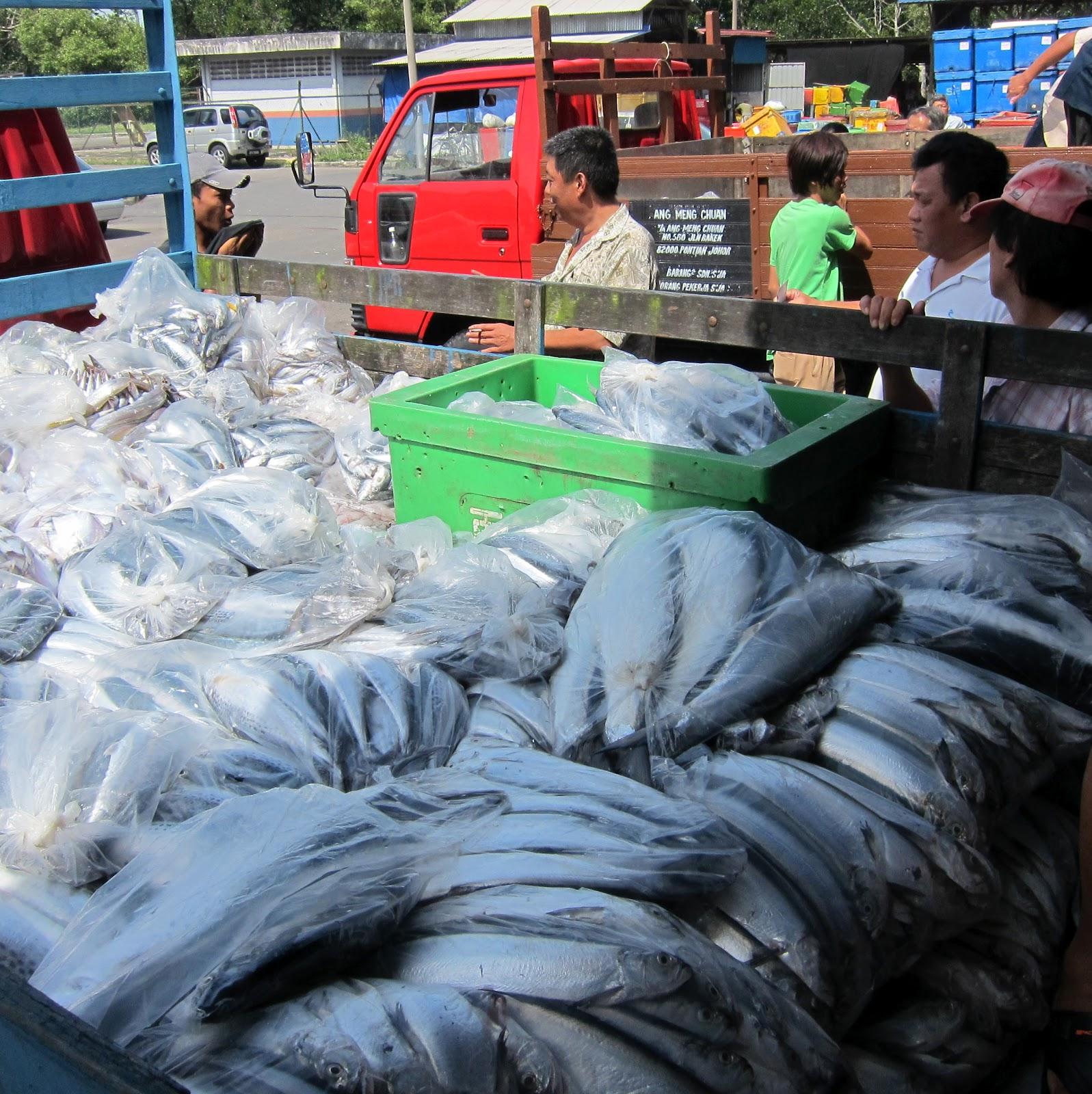 pontian wholesale fish market johor kaki travels for food