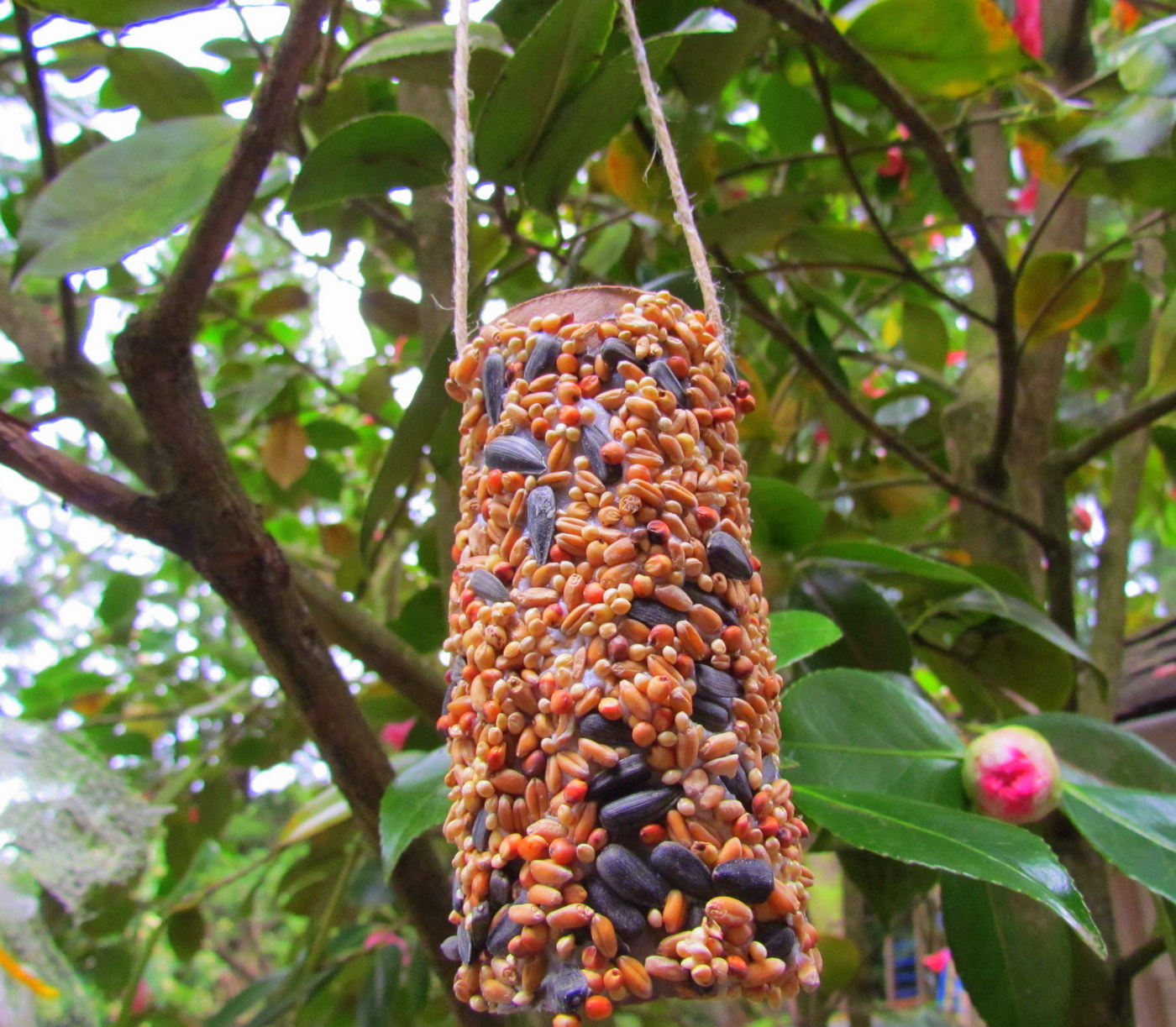 Learn to grow reuse toilet paper tubes for diy bird feeder for Toilet paper tube bird feeder
