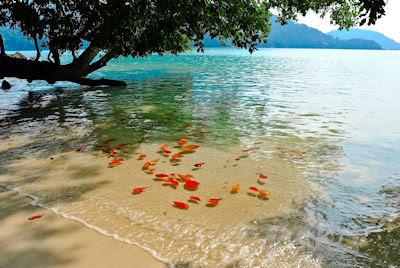 Isla Surín en el Parque Nacional de Tailandia - Surin island national park in Thailand