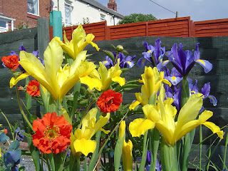 Dutch irises and geums; primary colours