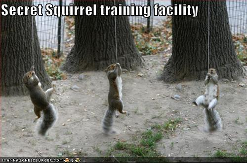 Weird Funny Photos: Secret Squirrel Training Facility