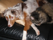 Who said they can't be together? cat and dog