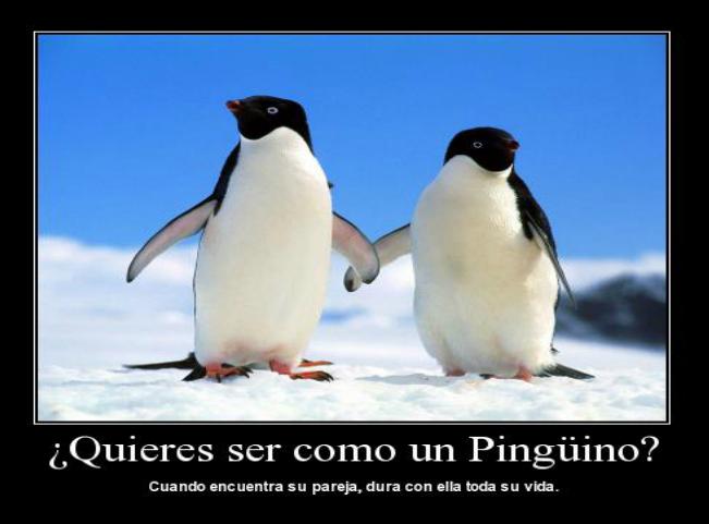A los pingüinos también les gusta  - Blog de Humor