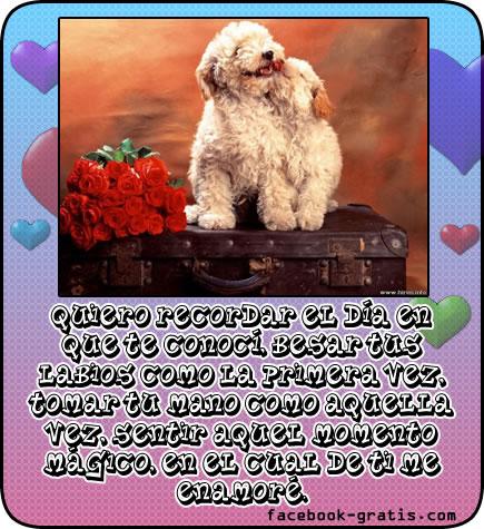 Postal de amor con perritos