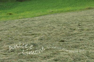 20% prato verde-80% erba secca