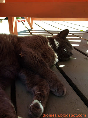 Grey Russian blue cat resting on the deck