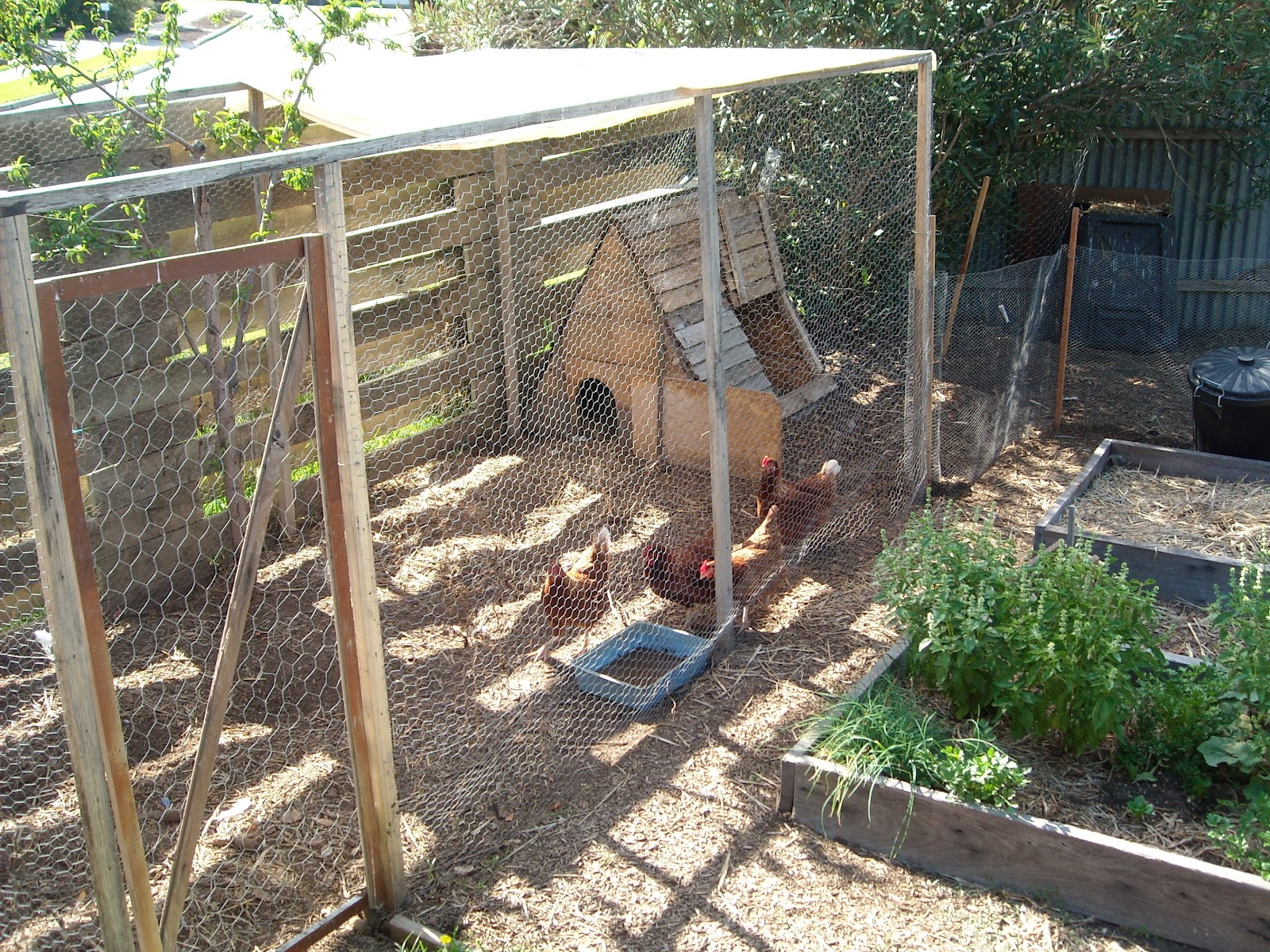 Zucchini island chicken enclosure designs be creative for Chicken enclosure ideas