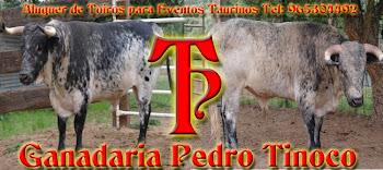 Pedro Tinoco