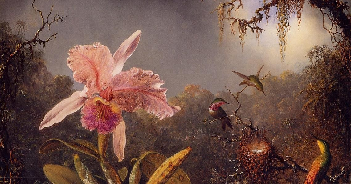 cattleya orchid and three brazilian hummingbirds Cattleya orchid and three brazilian hummingbirdsby martin johnson heade, 1871perhaps inspired by the writings of charles darwin, the artist studied these subjects in the wild during several expeditions to south america.