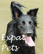 The Ersatz Guide To Expat Pets