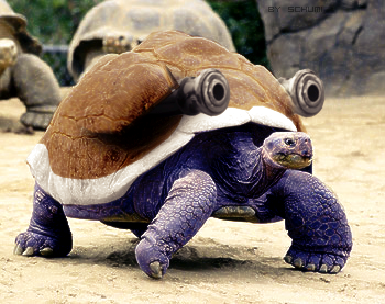 Pokemon real - Blastoise