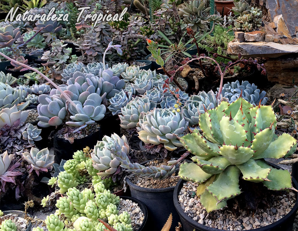 Naturaleza tropical manual para cultivar plantas for Ver plantas ornamentales