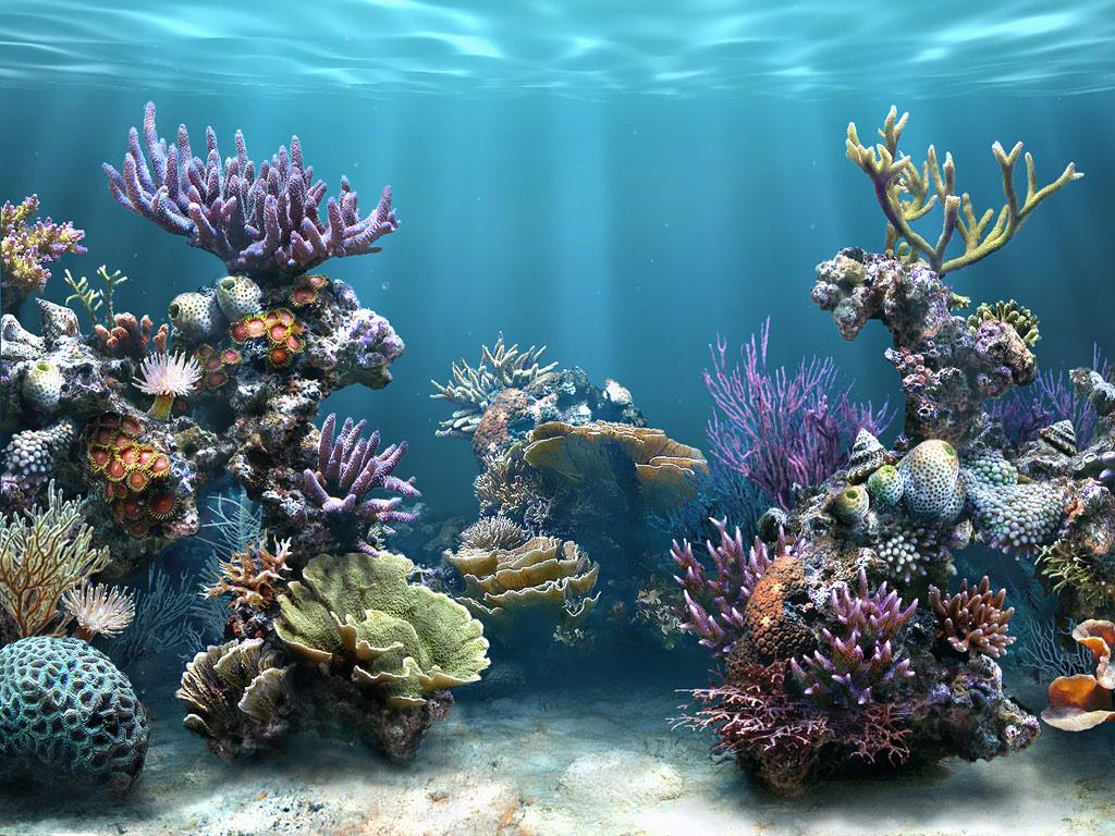maritza craig coral reef hd