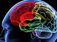 Kerja Otak Kita.