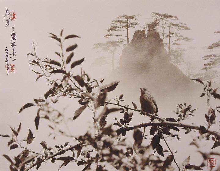 Fotografía de Don Hong Oai: ramas y montaña