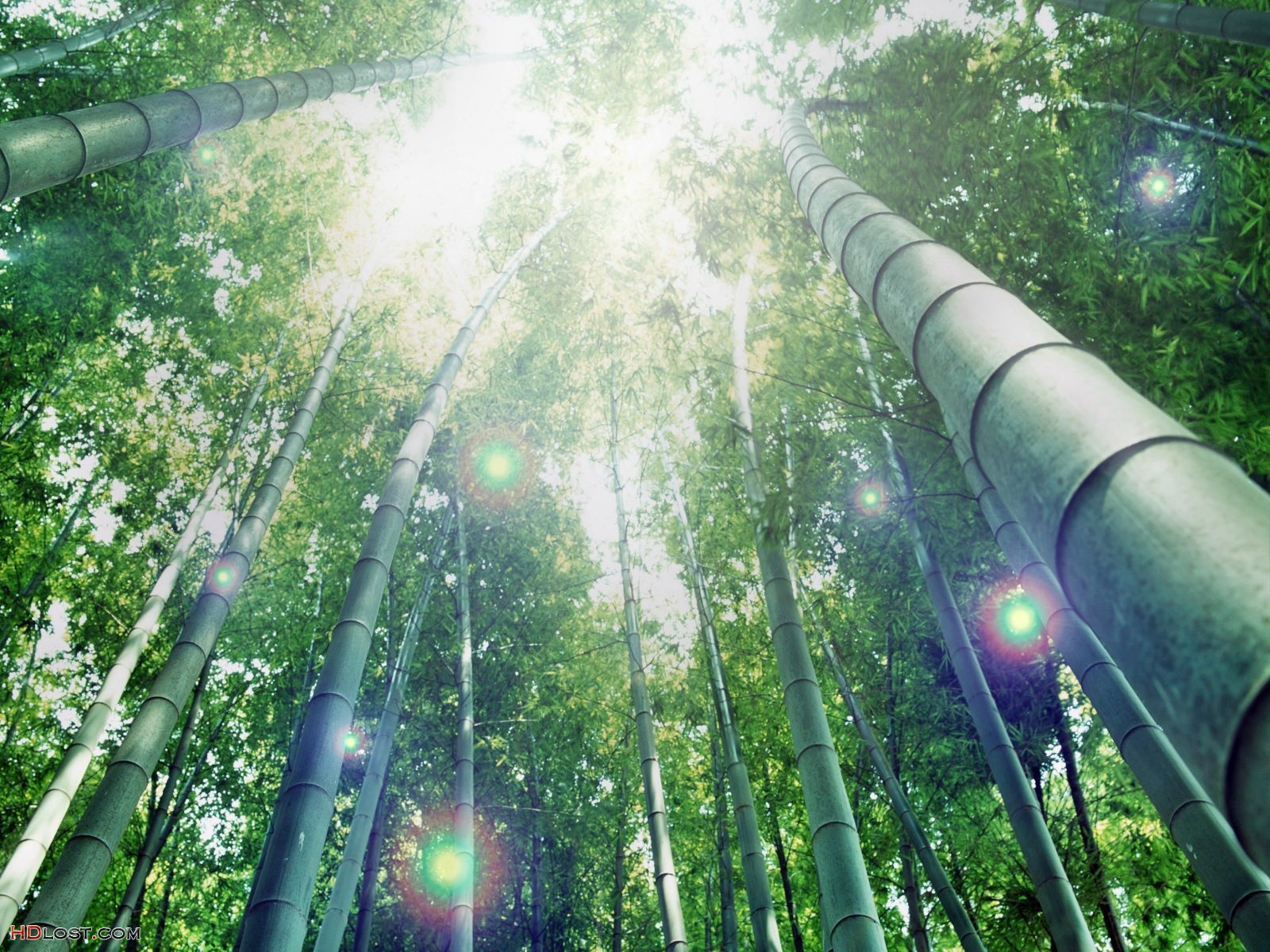 http://3.bp.blogspot.com/-JphF-aQYv14/Tq0d8qXhu3I/AAAAAAAABfM/0LotEhpcDJY/s1600/windows-7-backgrounds-bamboo-forest-1600x1200.jpg