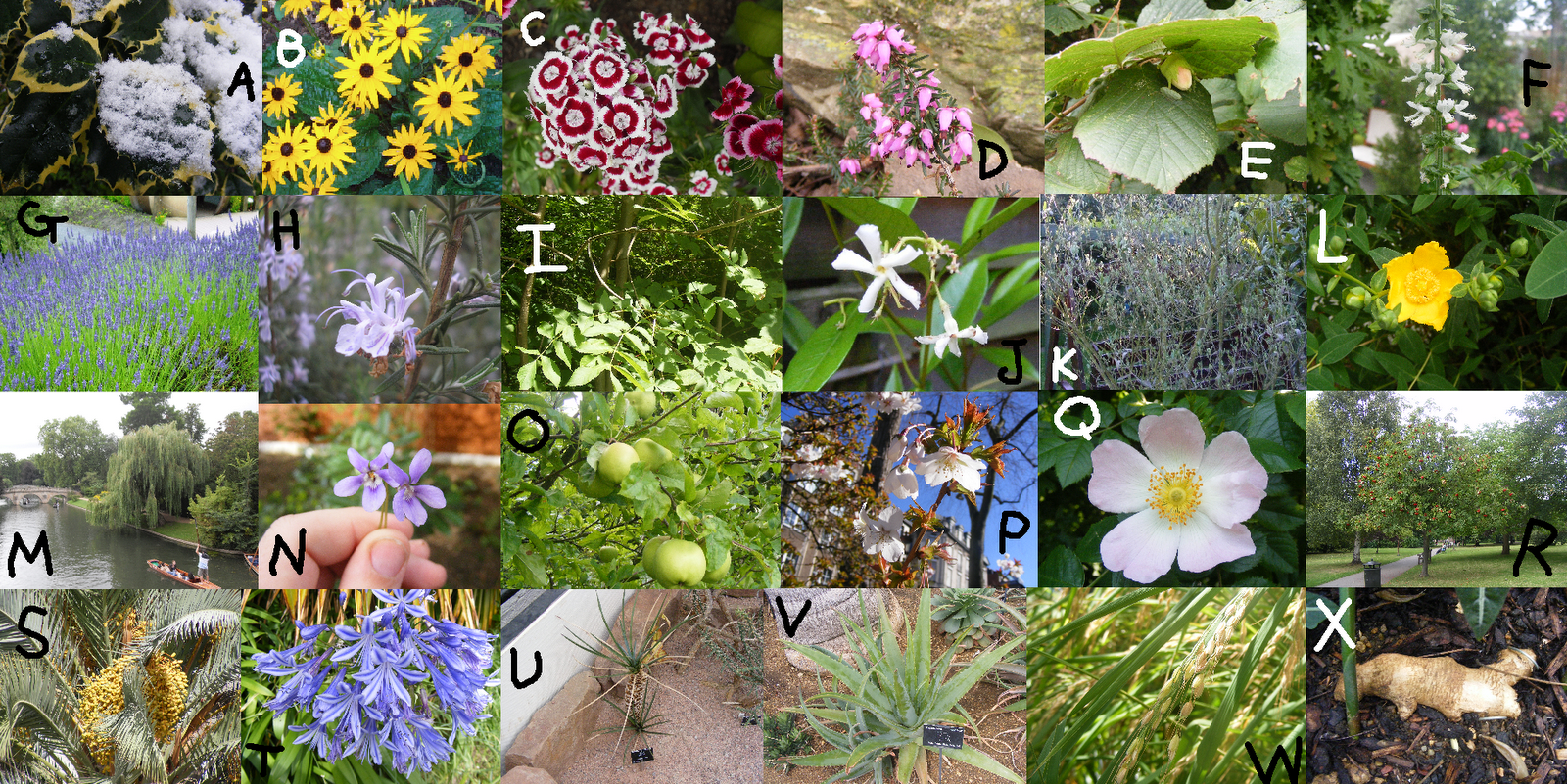 http://3.bp.blogspot.com/-JptvVw4FaFU/TrHvCwfxgeI/AAAAAAAACUk/DnPZdJueuRk/s1600/plants.PNG