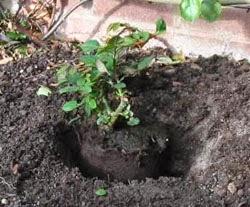 dales espacio a las plantas para que se desarrollen bien de acuerdo a su tamaño