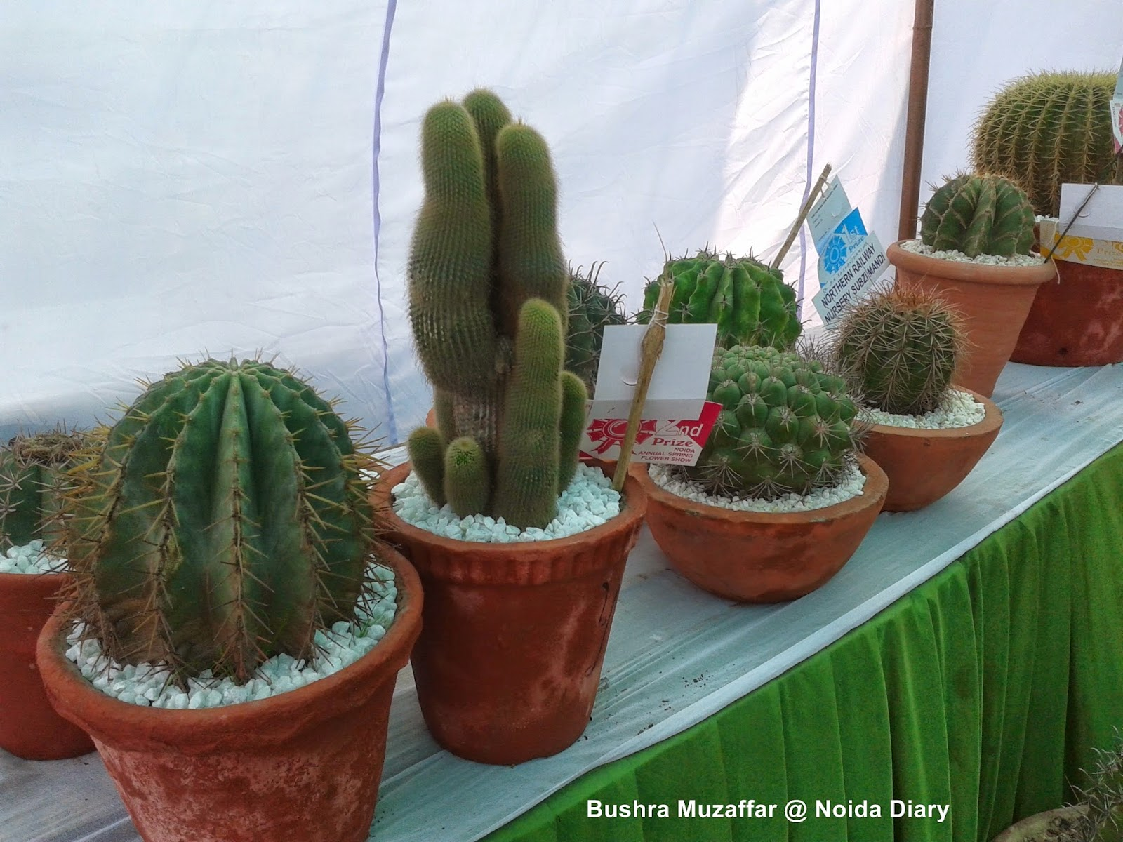 Cacti and Succulents at Noida Flower Show 2014