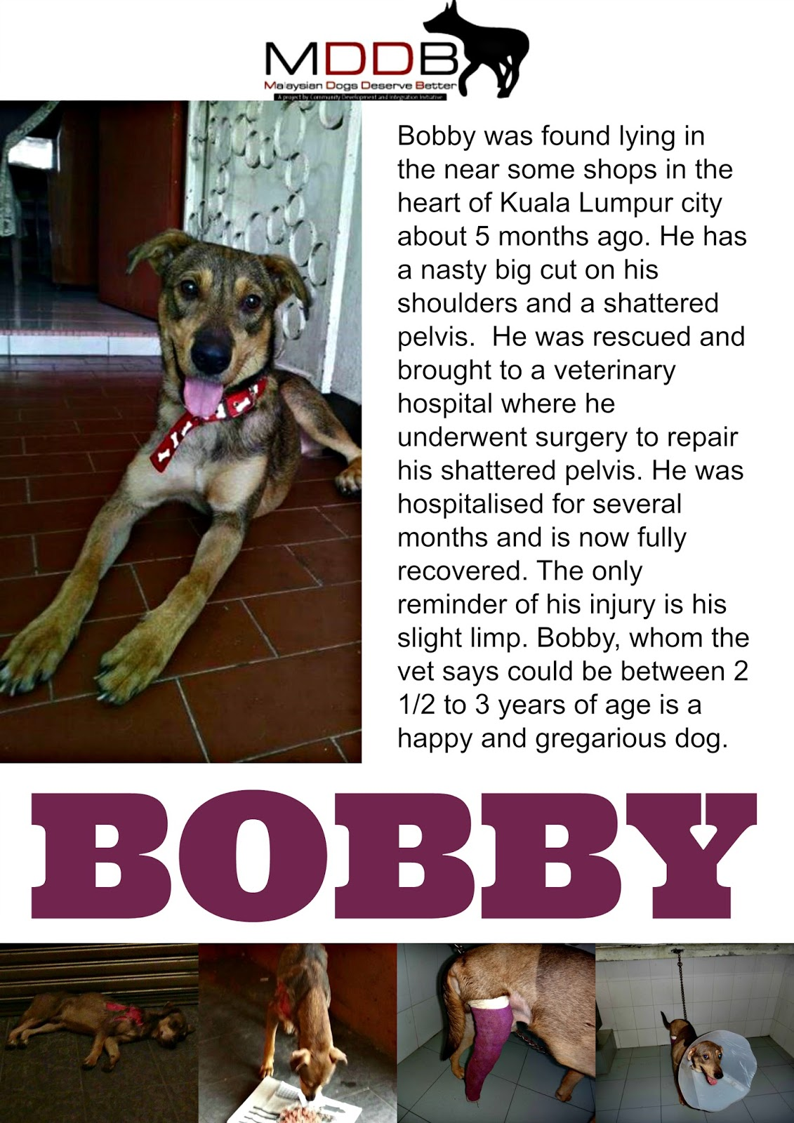 international foundation bobby blue adopted
