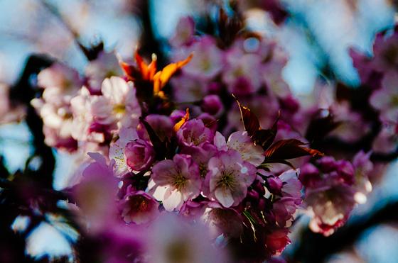 flower, Sushibird