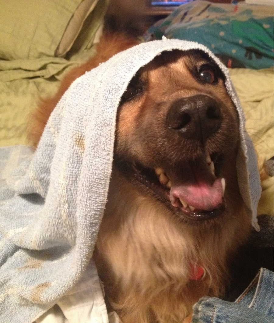 Cute dogs - part 86, funny dog photos, dog picture
