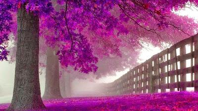 purple_trees-