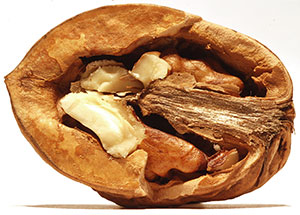 halved walnut in shell