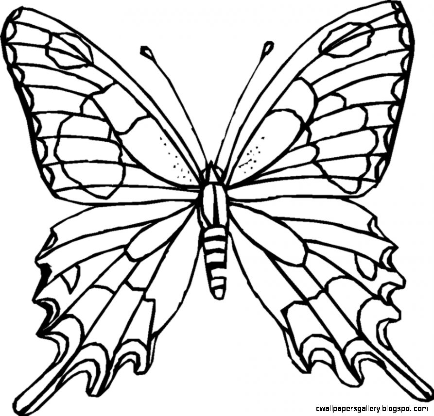 71 Images For Butterfly Outline Clipart   Cliparts for Kids and