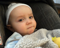 A New Grandson Teddy in Chicago Area