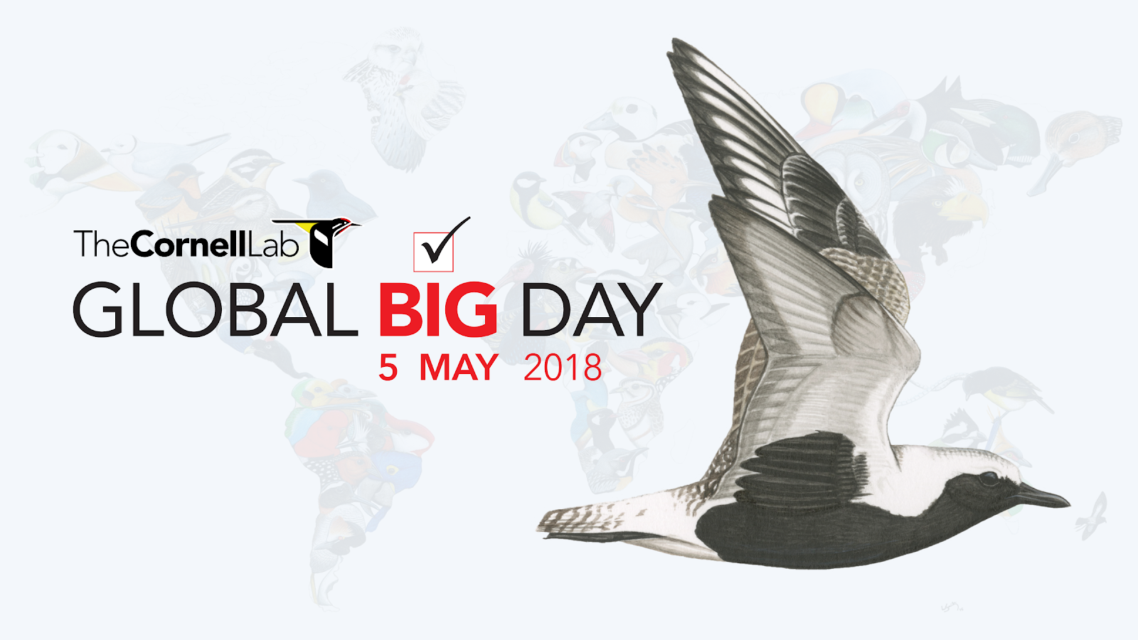 Global Big Day - Perú
