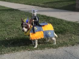 Dog custume