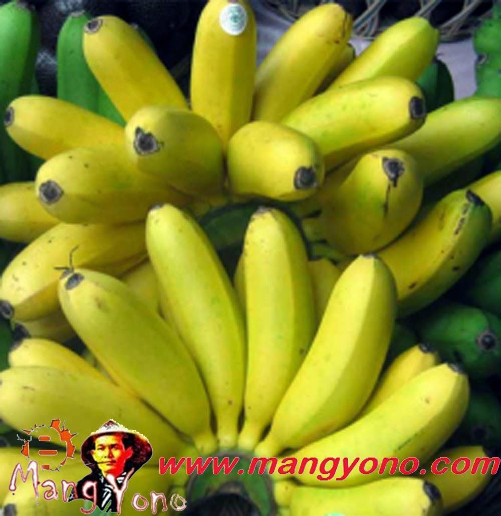 Ini dia pisang Mas Kirana, PTPN VIII Subang