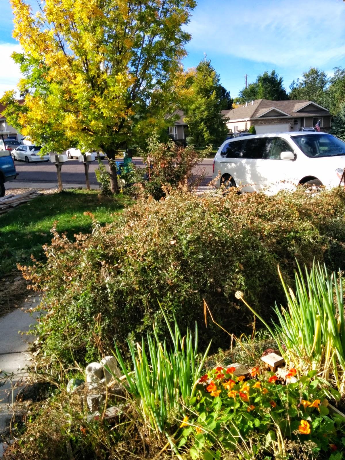 overgrown plants popular woman blog