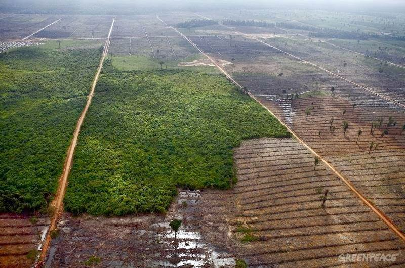 Lahan kebun kelapa sawit