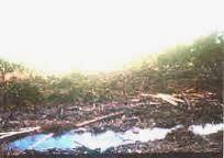 Tanah Gambut