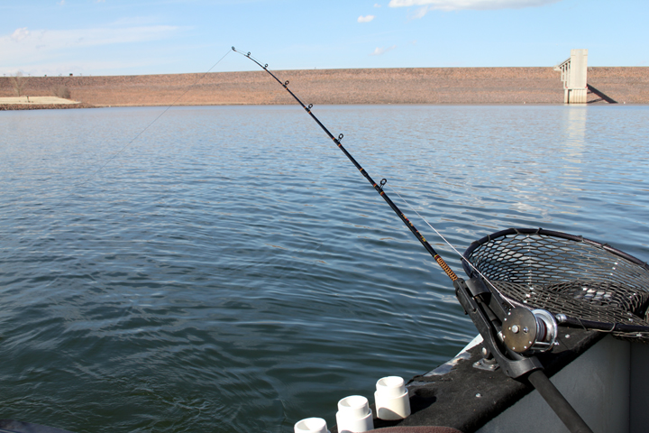 Rocky mountain adventure chatfield state park for Chatfield reservoir fishing report