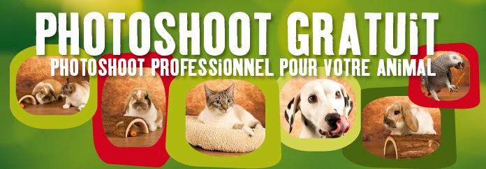 Site de rencontre belge gratuit 2016