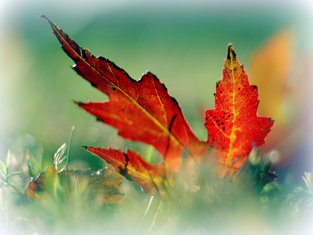 http://3.bp.blogspot.com/-JtWLJJfFVCg/T948Tl8iJJI/AAAAAAAAAKw/iacwYt-_r2s/s1600/nature-desktop-wallpaper-picture-2.jpg