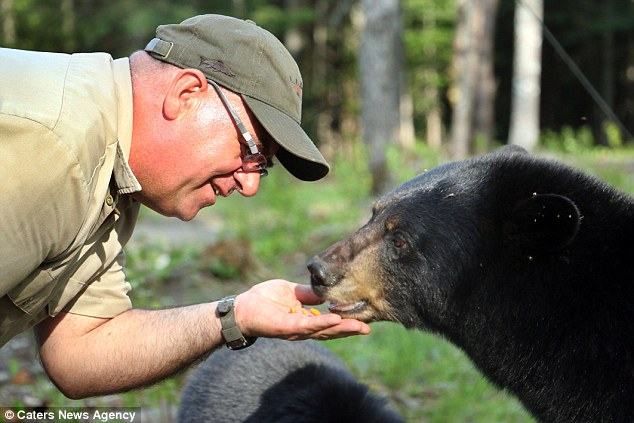 Canadian Man Has Formed A Unique Bond With Black Bears