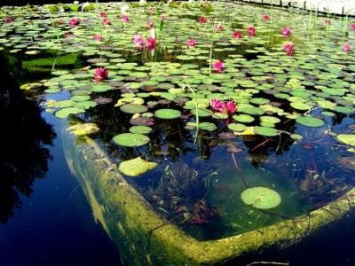 Arte y jardiner a plantas acu ticas for Vivero el estanque